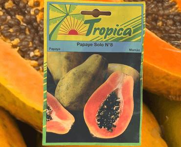 Presentación Papaya