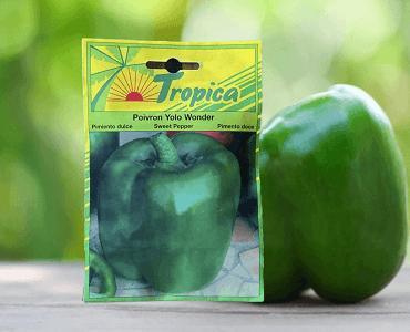 Presentación Pimentón Verde