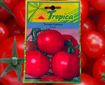Presentación Tomate Carioca